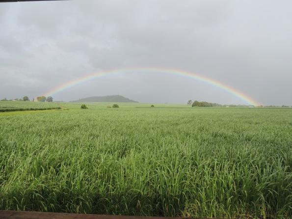 Rainbow 001 (2)