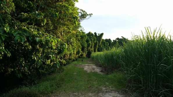 Mango Alley