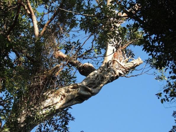 strange tree2